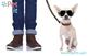 Thumb moematem anuncio dogwalker